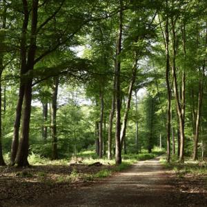 Erlebniswanderungen durch den Laubwald